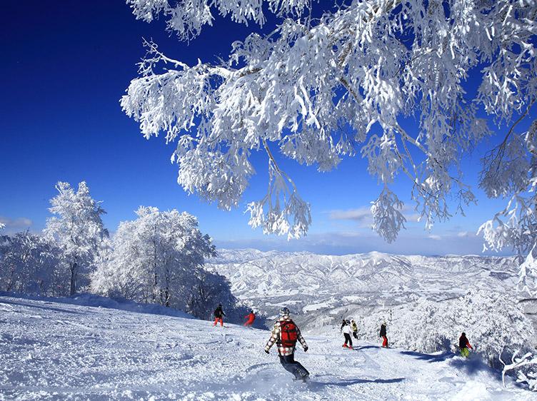 野沢温泉スキー場 割引